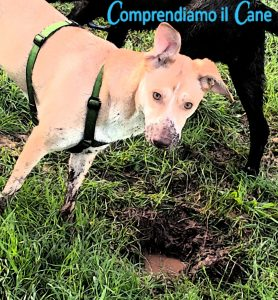 cane-scava-nel-fango