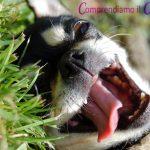 addestramento-cani-roma