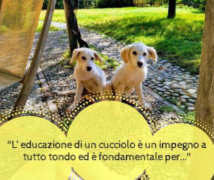 due-cuccioli-di-cane-bianchi-a-lezione-di-educazione-cinofila