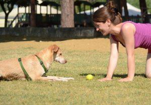 addestramento cinofilo usando il gioco, in questo caso la pallina